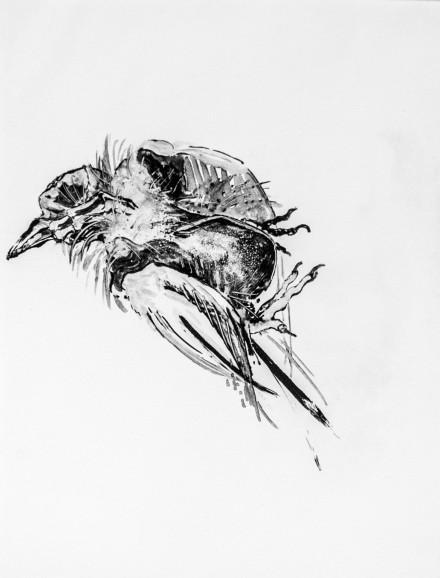 Le pigeon d'aligna